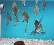 Bangalore Cubbon Park Aquarium