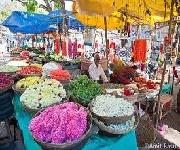 Bangalore Basavana Gudi Market/ Margosa Road